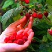 gallery/img-mini-Fruits_Framboises